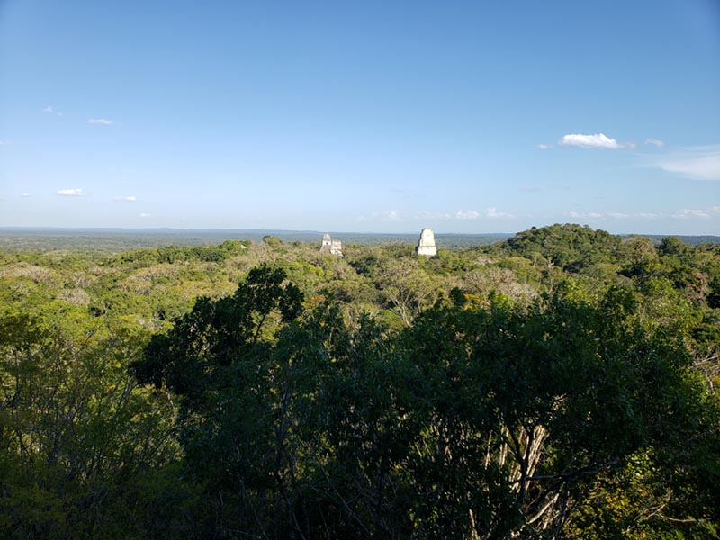 View from Tikal Pyramid Looking for Orange-breasted Falcon - Guatemala